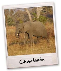 chalimandu