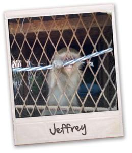 jeffry the monkey copy