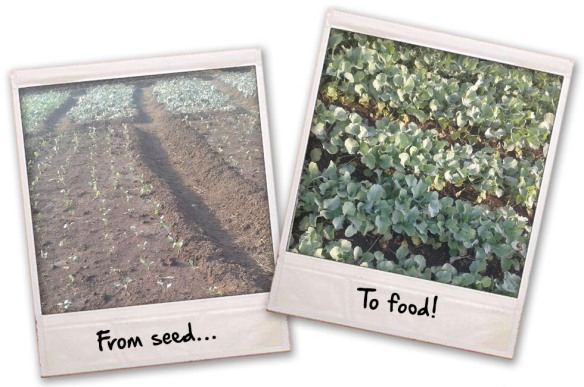 from-seed-to-food
