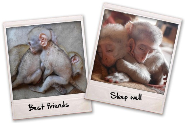 sleeping-monkey-blog