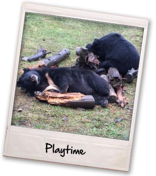 05-bears-playing