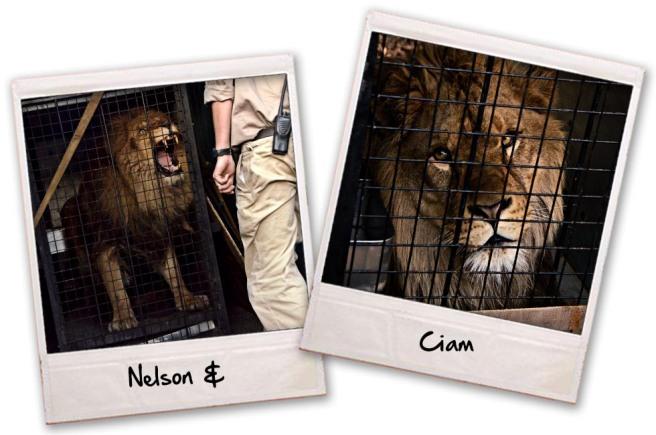 Nelson & Ciam Crates