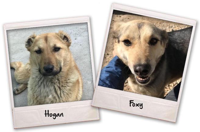 Hogan & Foxy