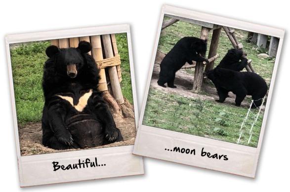 4. beautiful moon bears