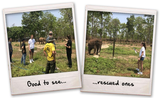 8 rescued eles
