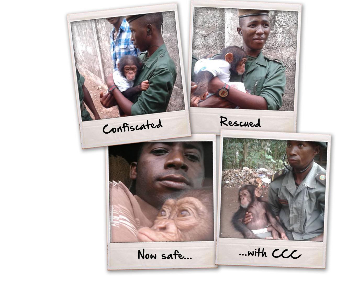 Chimp Recue