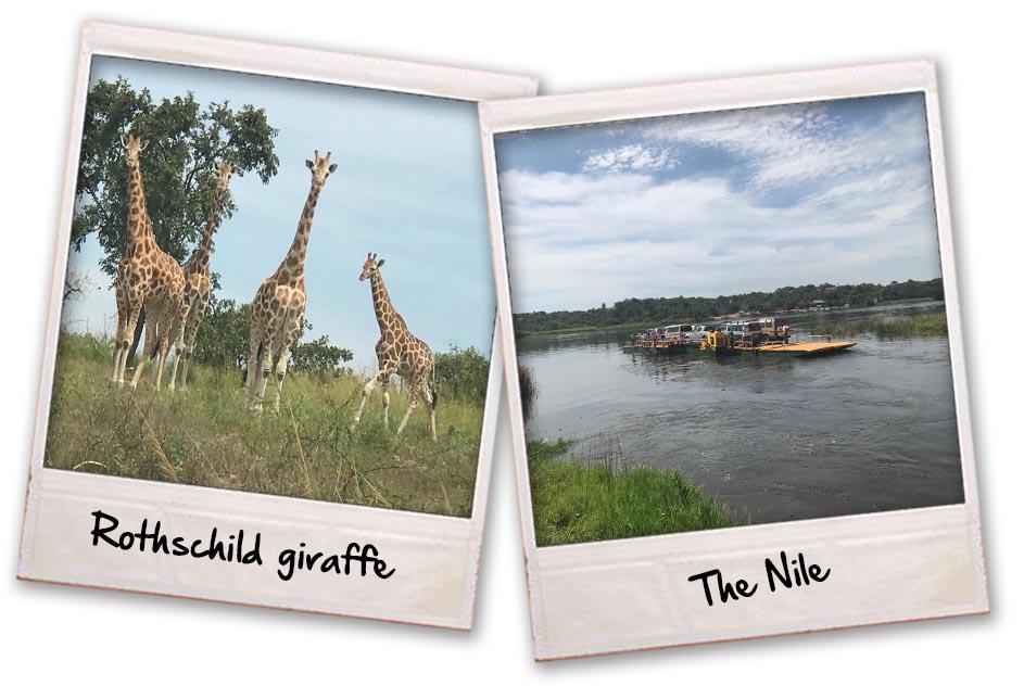 02 Giraffe & Nile
