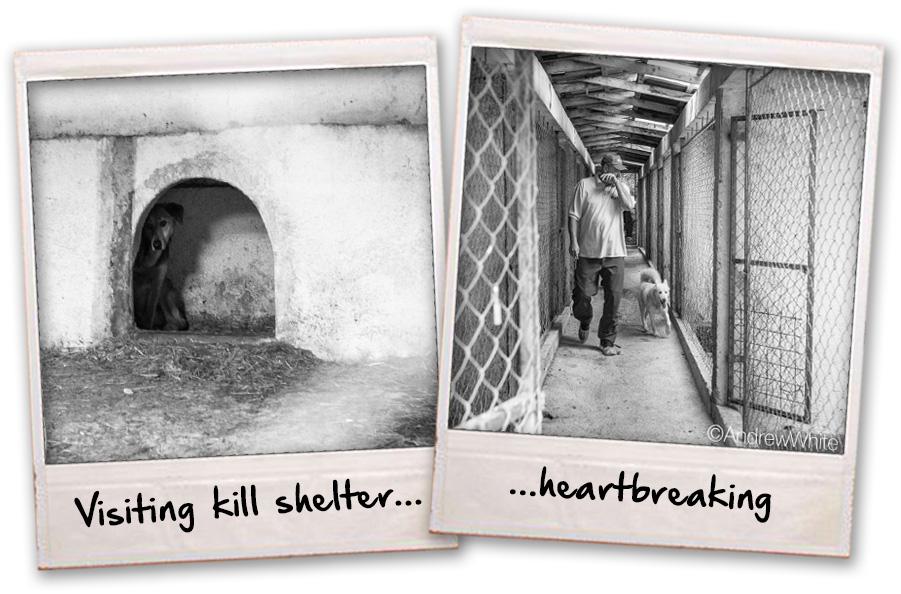 Kkill shelters