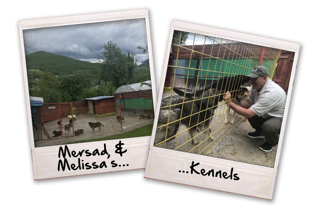 mersad and melissas kennels
